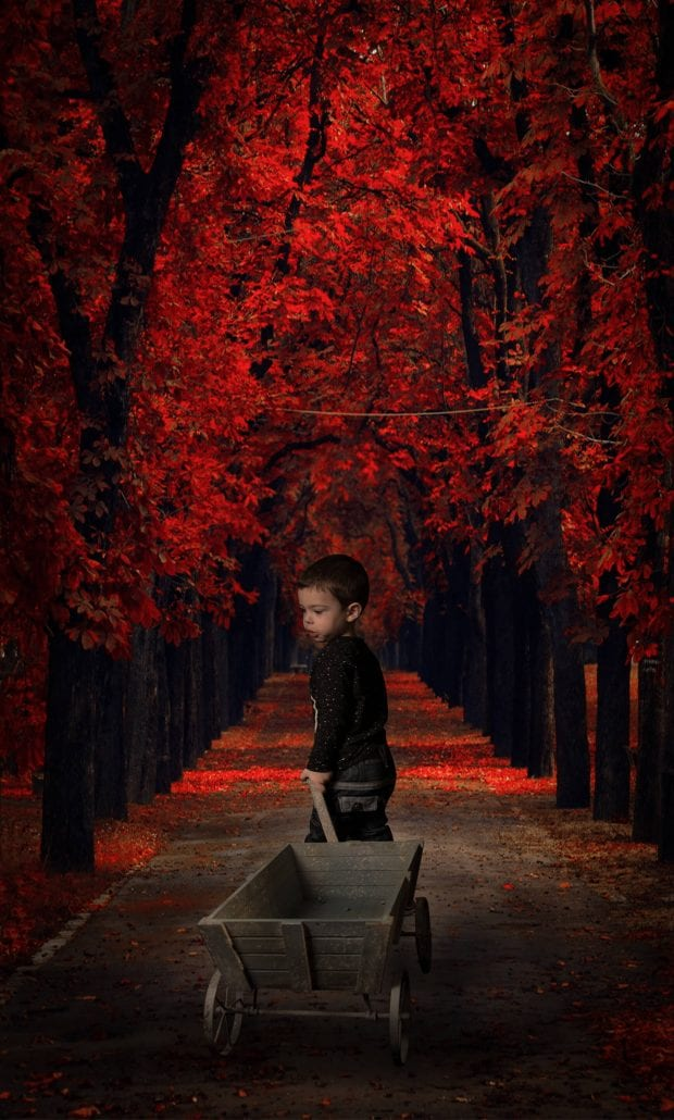 portrait photography composite toddler trees